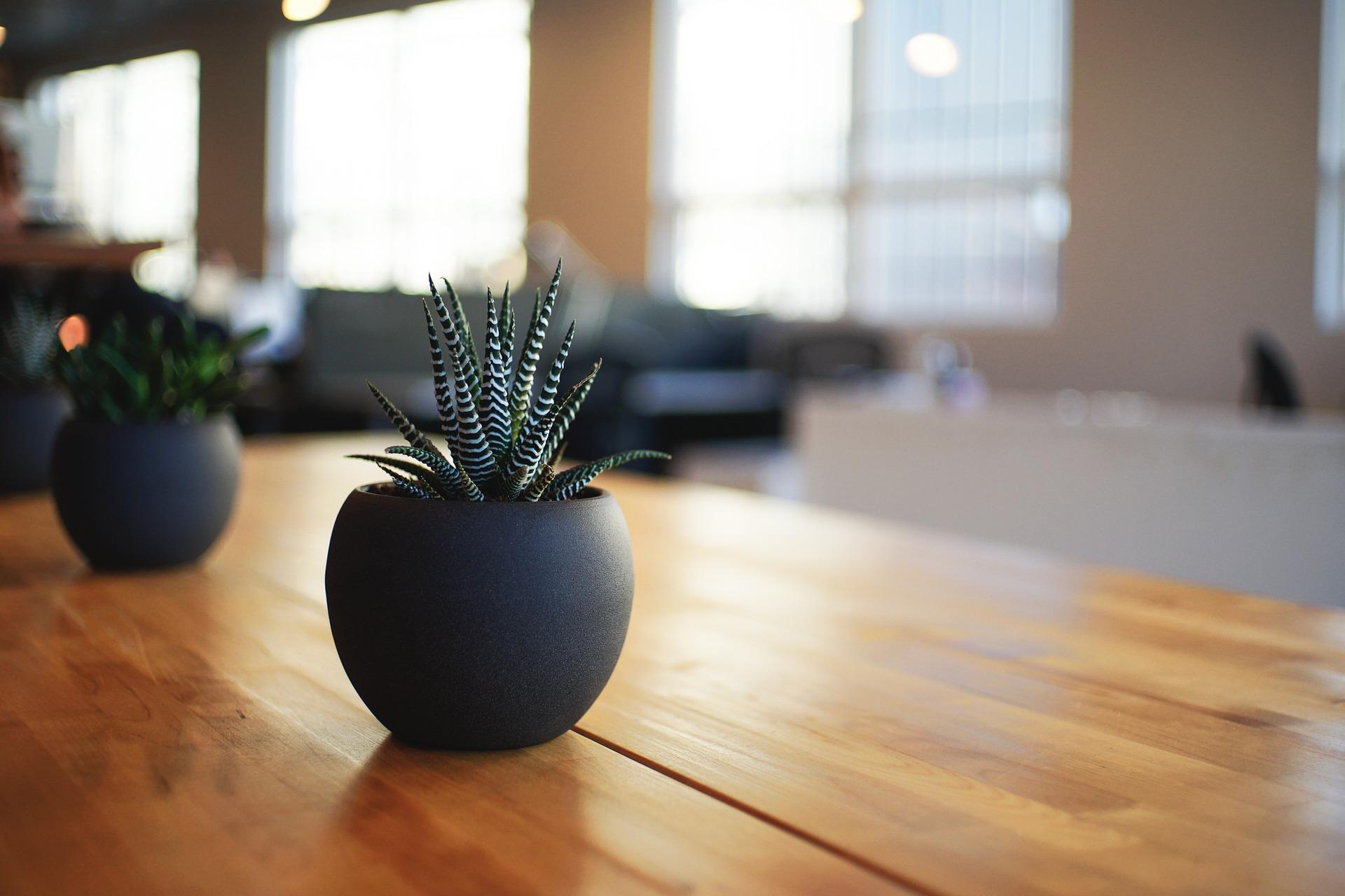 モデル オススメ 観葉植物